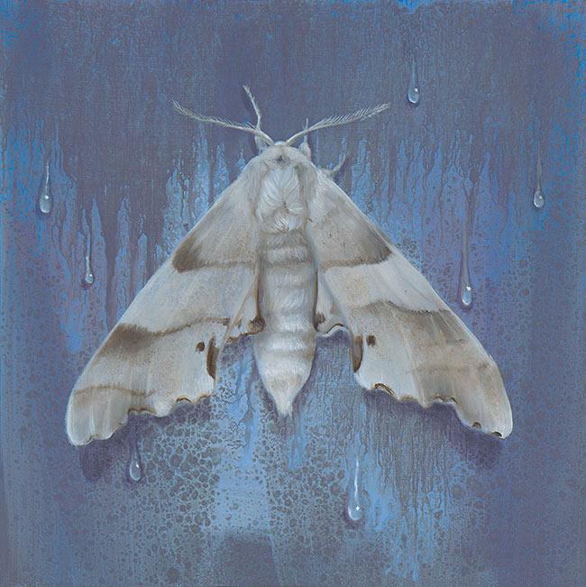 Kari-Lise Alexander - Moth #2