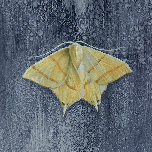 Kari-Lise Alexander - Moth (Yellow)