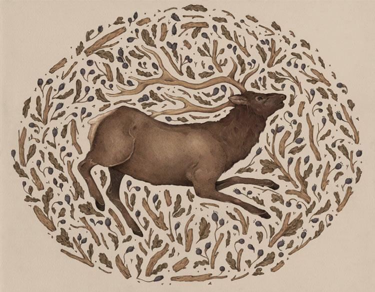 Jessica Roux - Elk in Nature