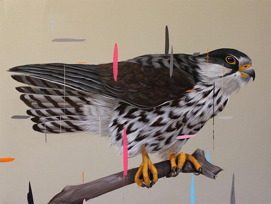 Frank Gonzales - Amur Falcon