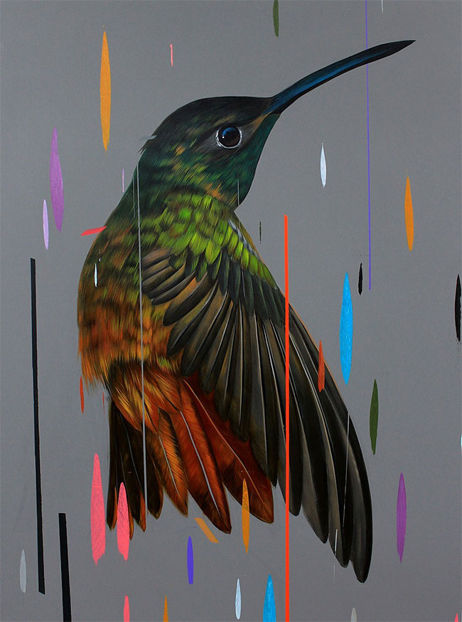 Frank Gonzales - Buff Breasted Hummingbird
