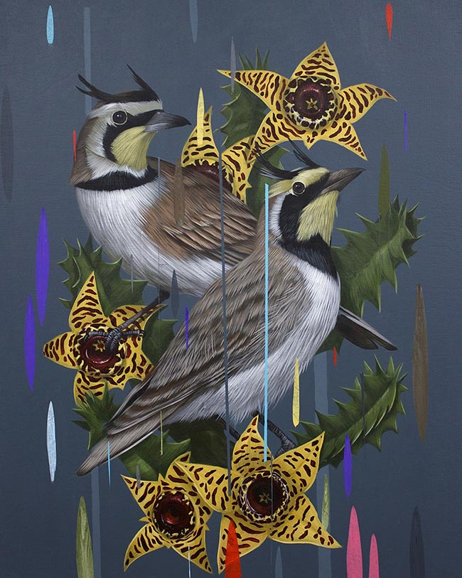 Frank Gonzales - Horned Larks and Huernia Zebrinas