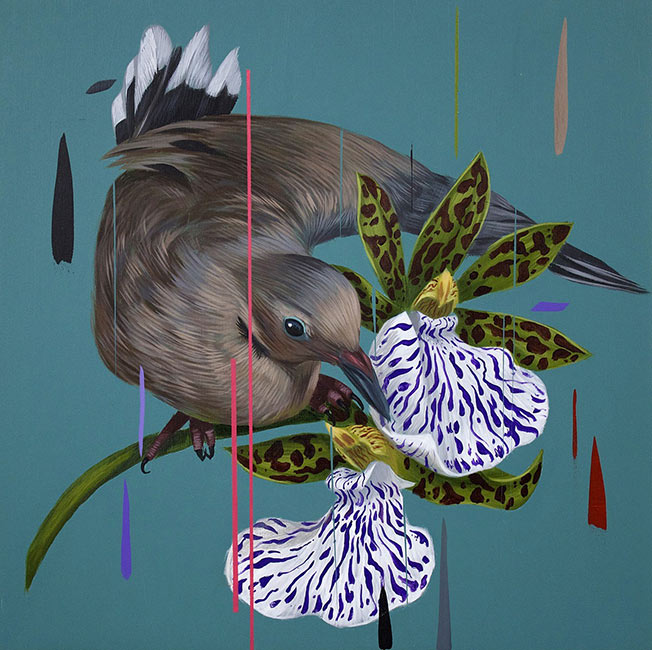 Frank Gonzales - Mourning Dove and Odm Orchids