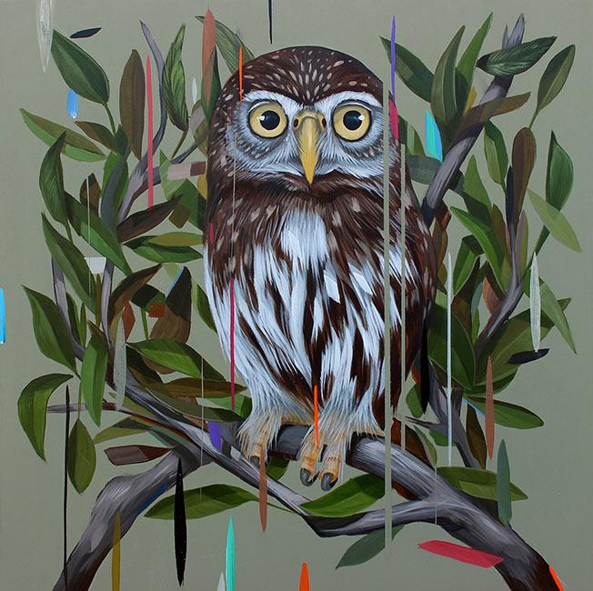 Frank Gonzales - Pygmy Owl