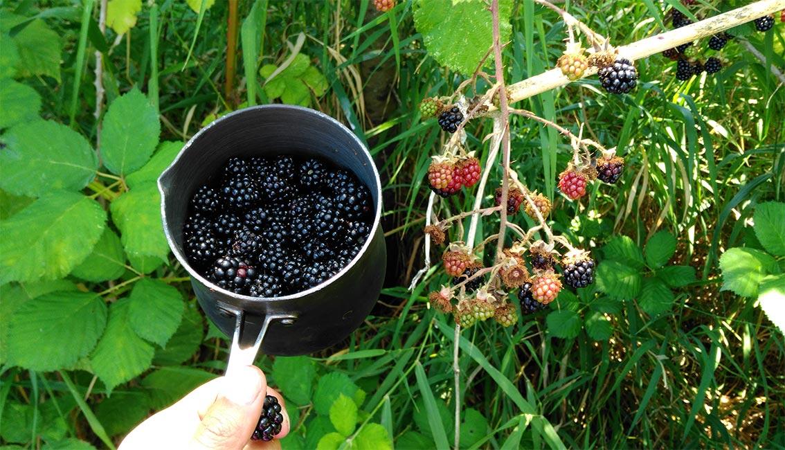 Ana Bagayan - Berries