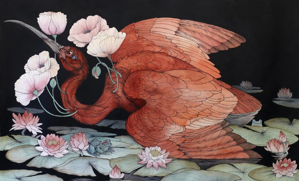 Caitlin Hackett - Scarlet Ibis