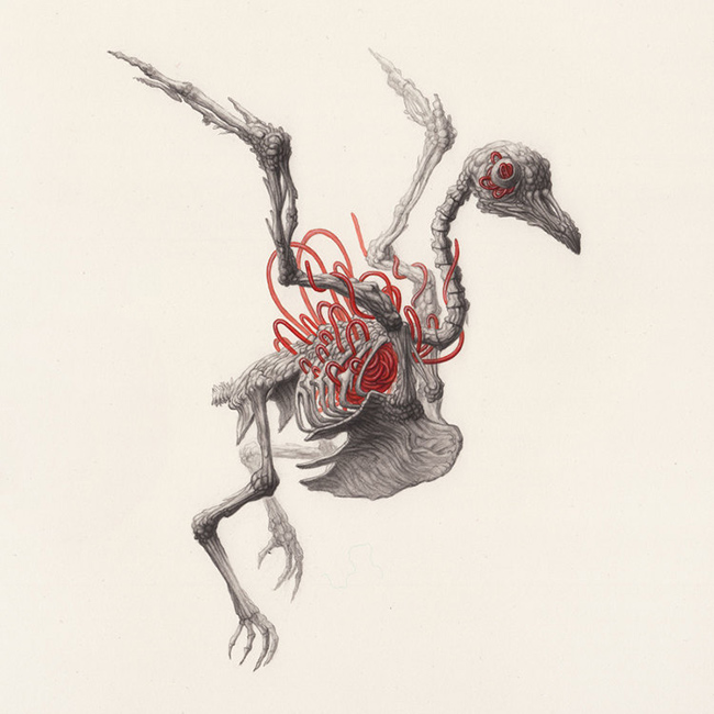 Nick Sheehy - Bird Skeleton