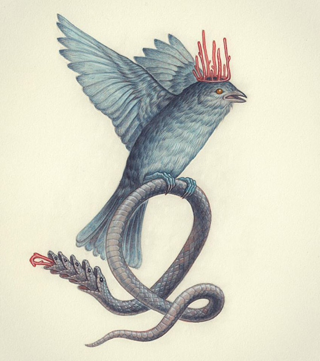 Nick Sheehy - Bird Snake