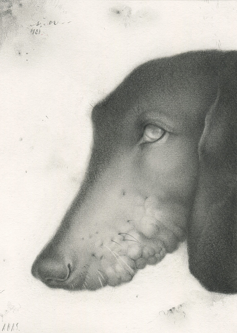 Allison Sommers - Savonarola