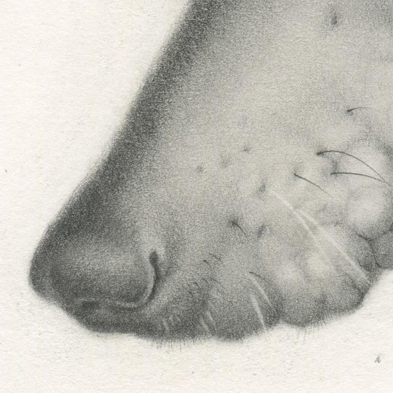 Allison Sommers - Savonarola (Detail 2)