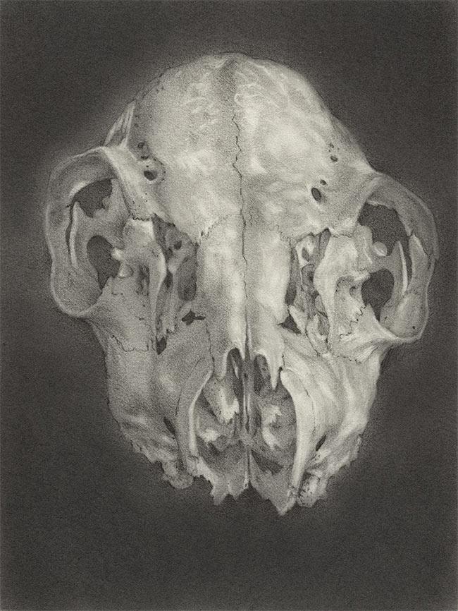 Nathan Reidt - Deer Skull