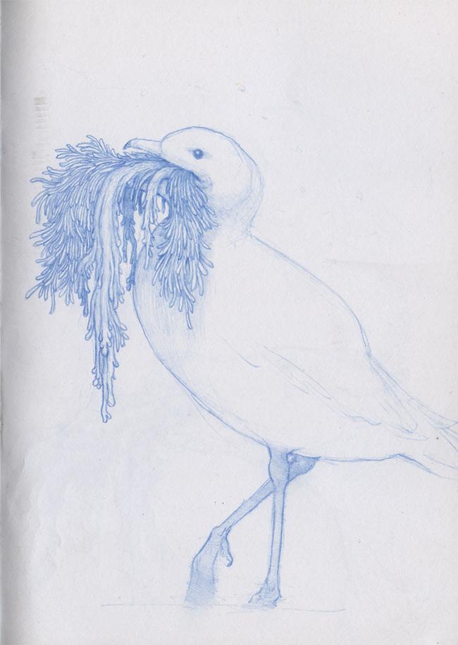 Nathan Reidt - Sketchbook Seagull
