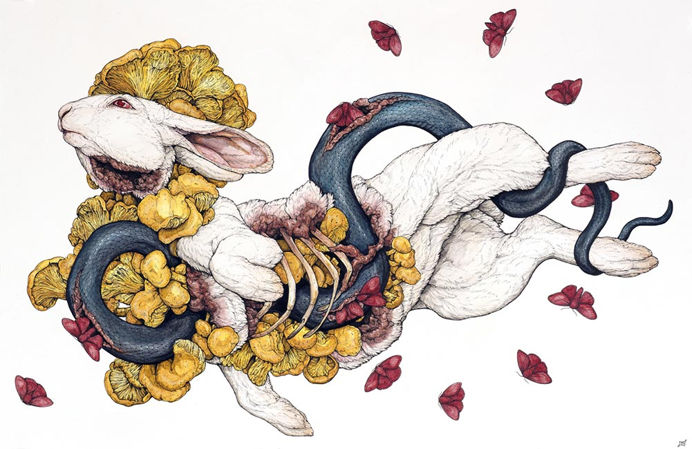 Lauren Marx - The Contemplation of Lepus