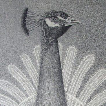 David Alvarez - Peacock (Detail 1)