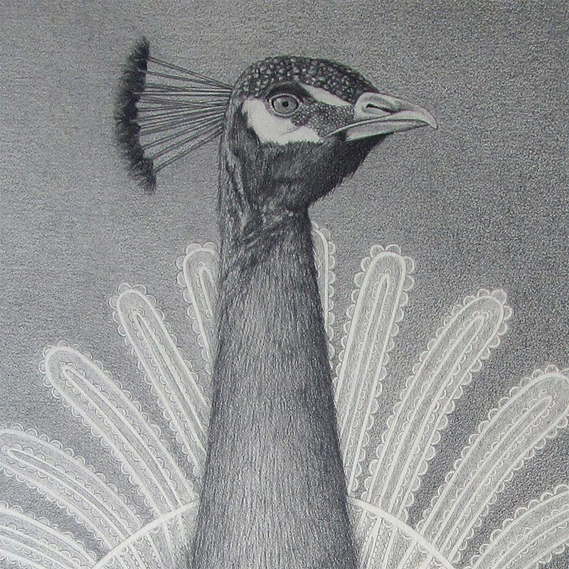 David Alvarez - Peacock (Detail 1)