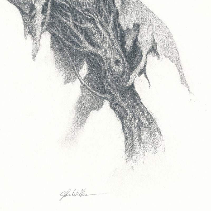 John Walker - Torso Drawing 2 (Detail 2)