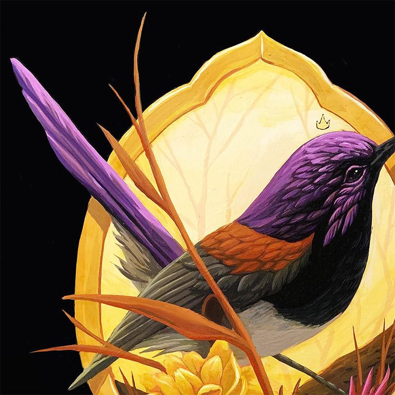 Andrew Ghrist - The Variegated Fairywren (Detail 1)