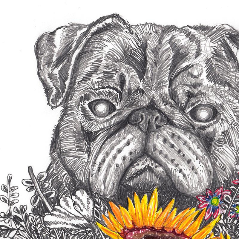 John Casey - Wild Pug (Detail 1)