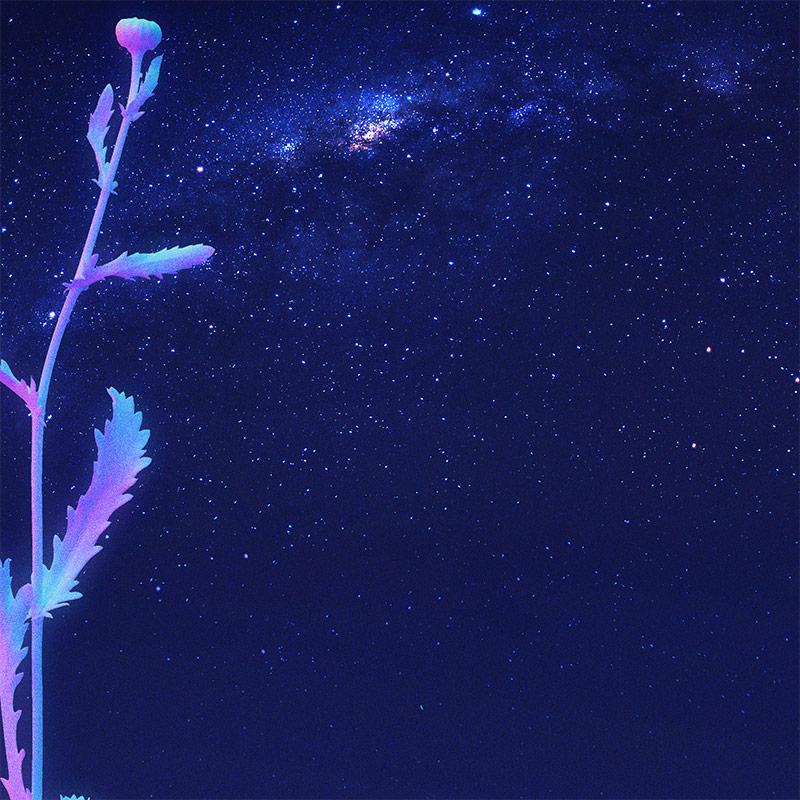 Xsullo - Nocturnal Bloom (Detail 1)