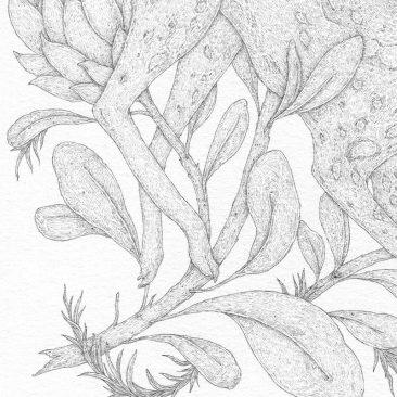 Jessica Roux - African Wild Dog (Detail 2)