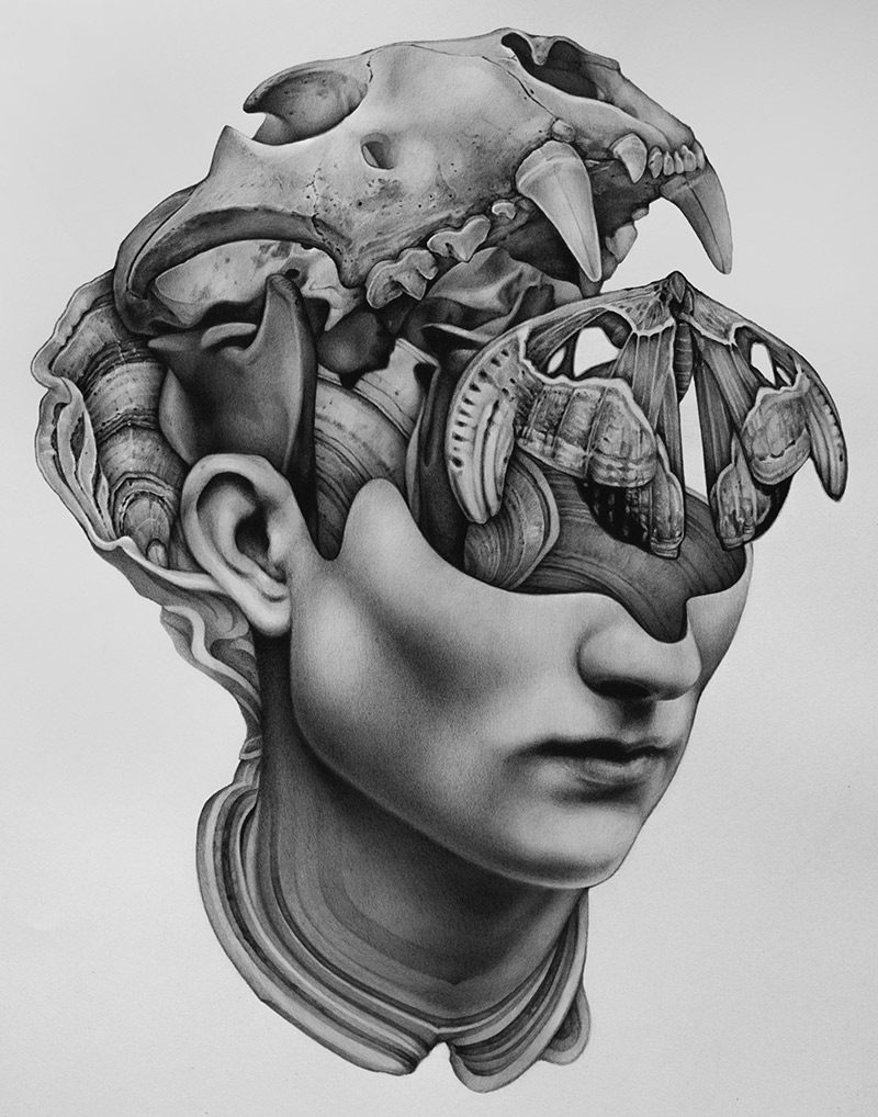Collin Elder - Amnesia