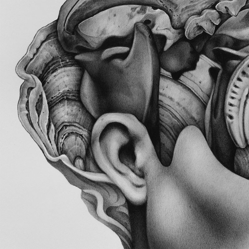 Collin Elder - Amnesia (Detail 2)