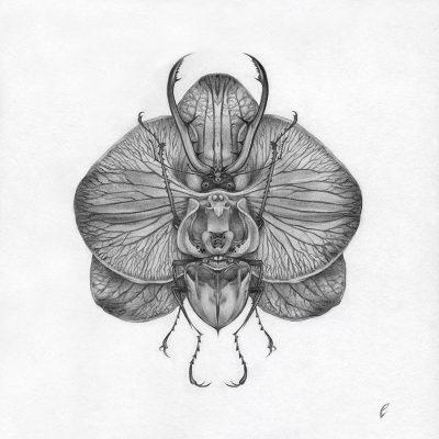 Edward Cao - Orchid Beetle, II