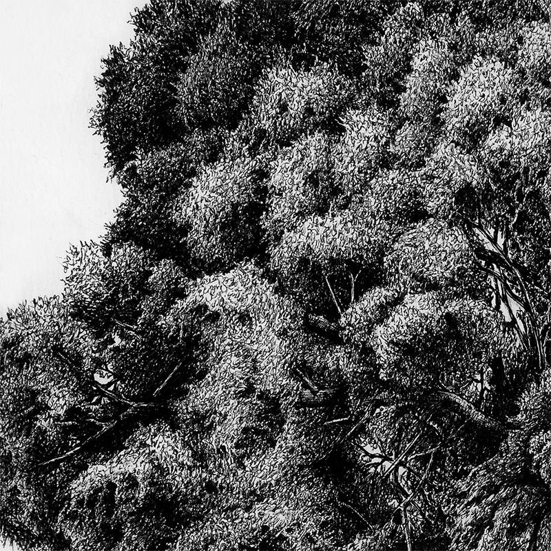 Karl Trewhela - Juniper 2 - Tree 4 (Detail 1)