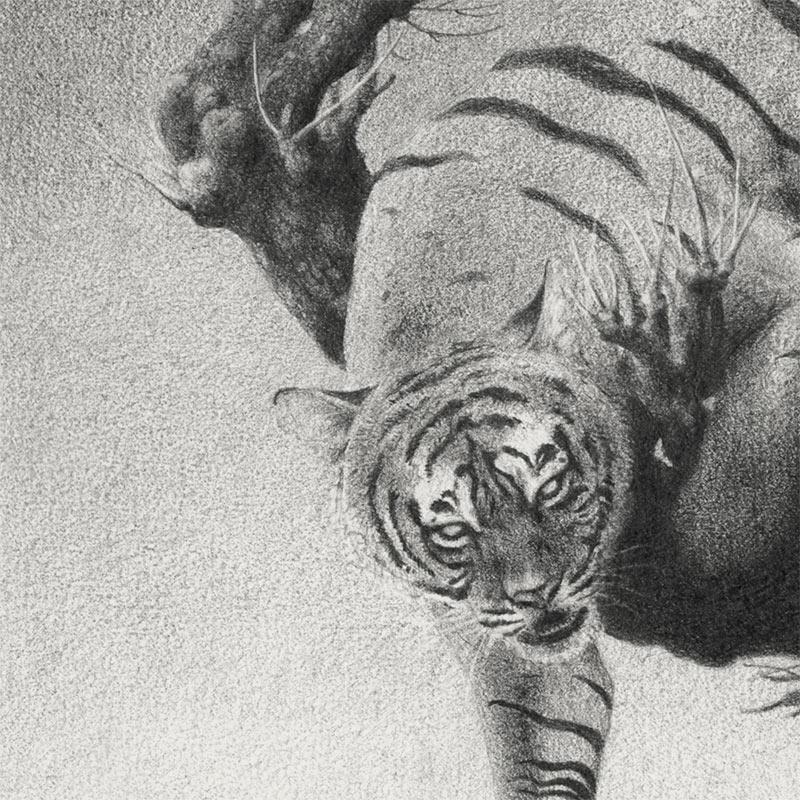 Garis Edelweiss - Sembah Amarah (Detail 2)