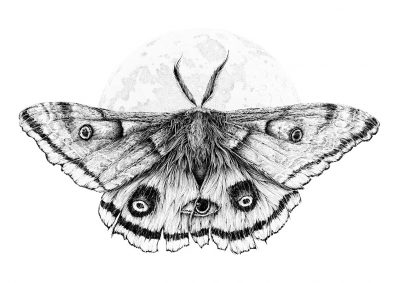 Karl Trewhela - The Guardian - Ellie's Moth