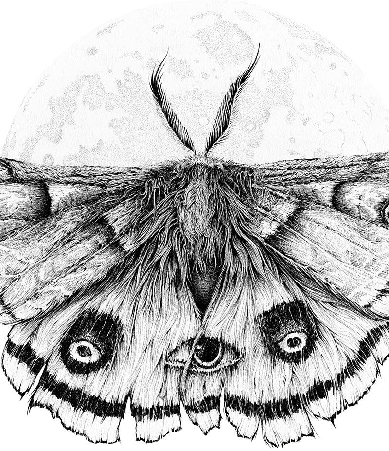 Karl Trewhela - The Guardian - Ellie's Moth (Detail)