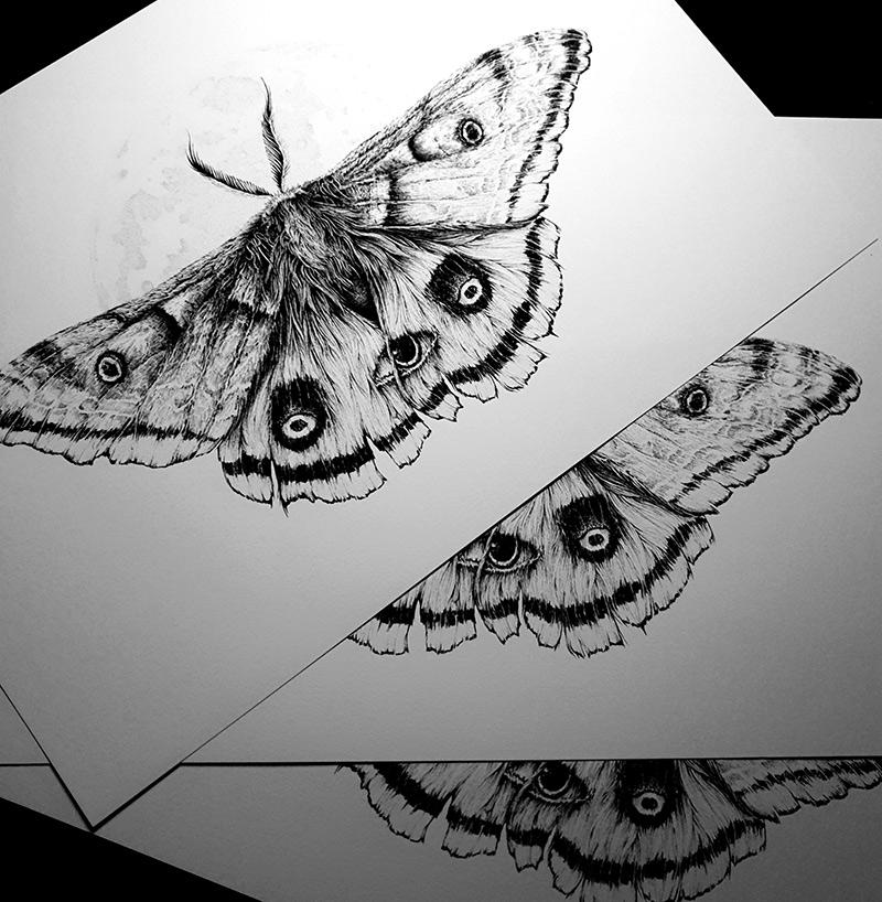 Karl Trewhela - The Guardian - Ellie's Moth (Print)