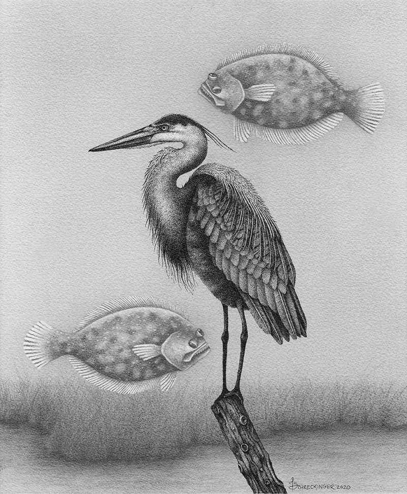 Juliet Schreckinger - Herman the Heron and his Flying Flounders