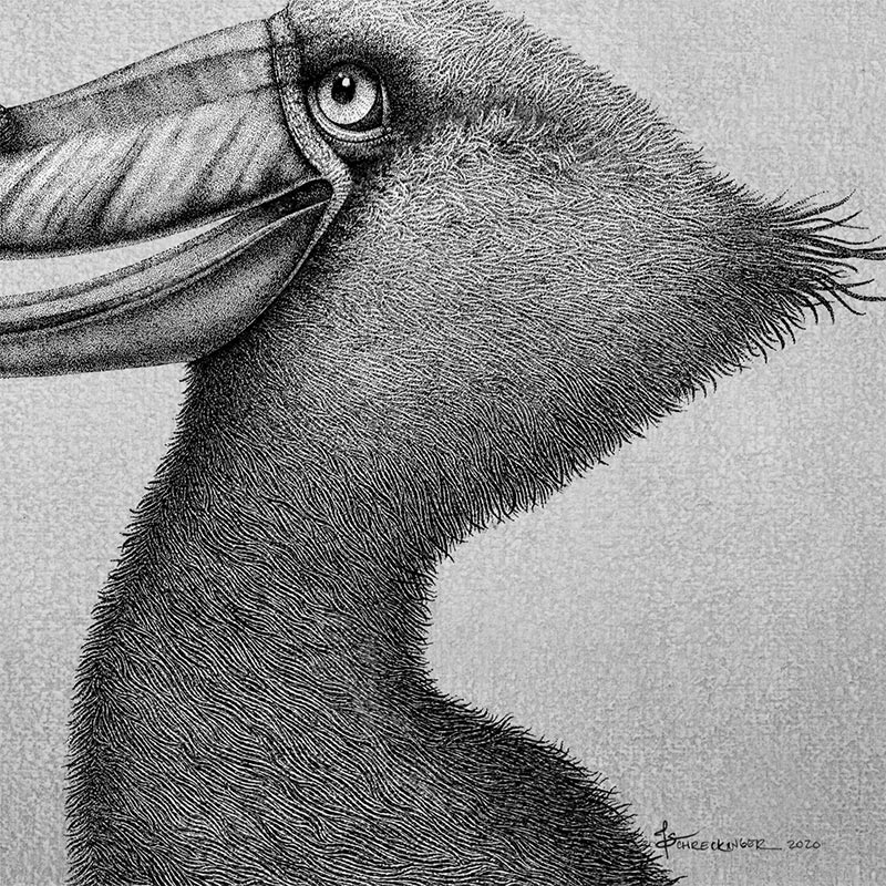 Juliet Schreckinger - Sherman the Shoebill and his Toad Stack (Detail 2)