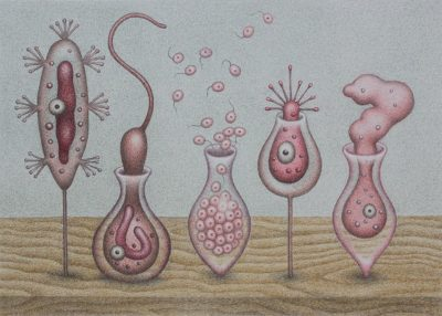 Catriona Secker - Study for Protozoans