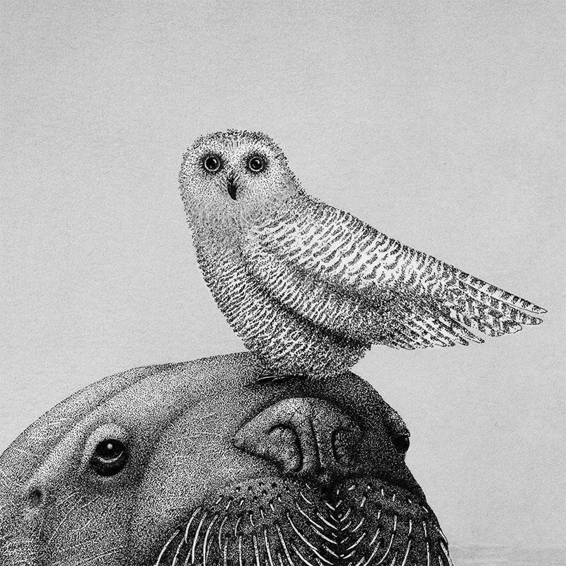 Juliet Schreckinger - Alfred and Mildred the Snowy Owl (Detail 1)