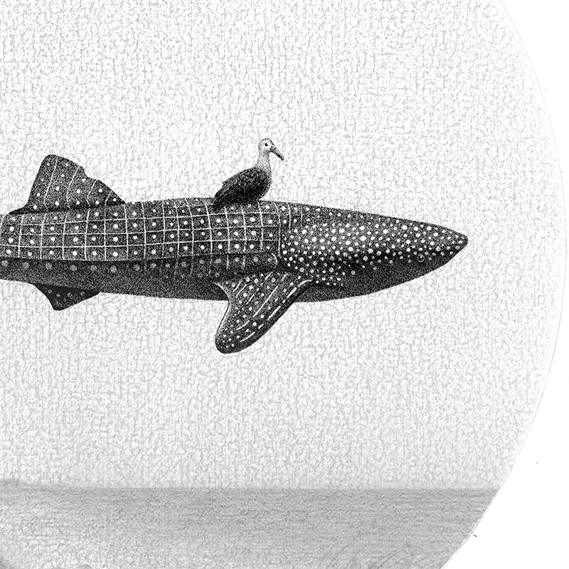 Juliet Schreckinger - Charlie the Whale Shark and his Albatross (Detail 1)