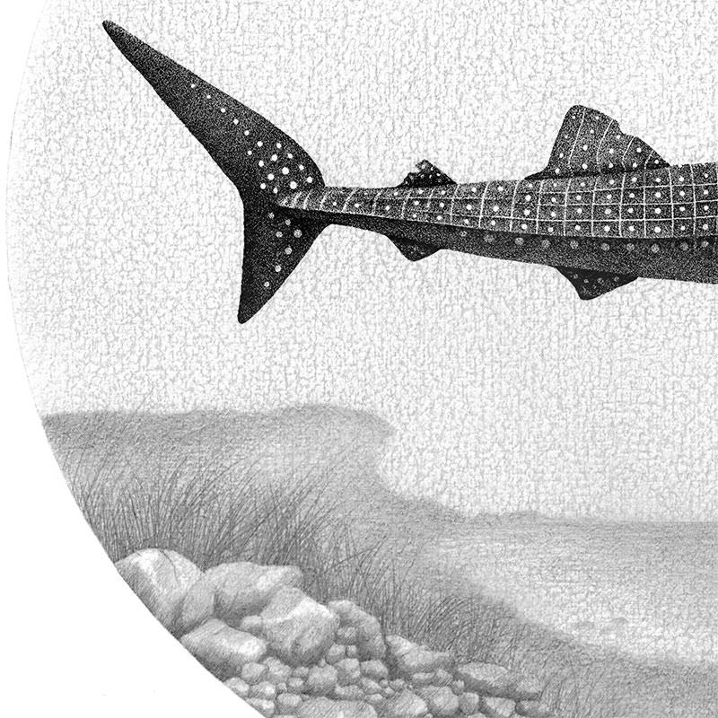 Juliet Schreckinger - Charlie the Whale Shark and his Albatross (Detail 2)