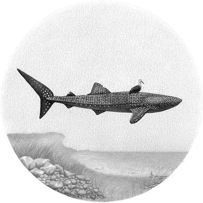 Juliet Schreckinger - Charlie the Whale Shark and his Albatross