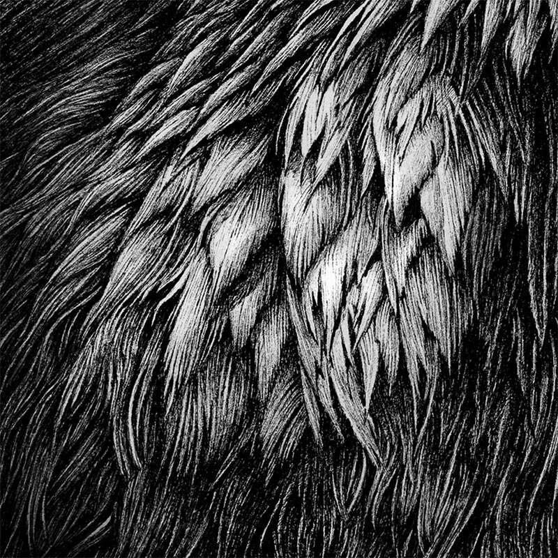 Karl Trewhela - Ghost Raven (Detail 2)