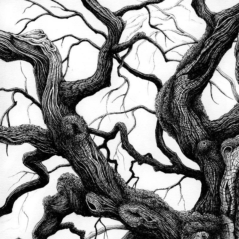 Karl Trewhela - Great Oak (Detail 1)