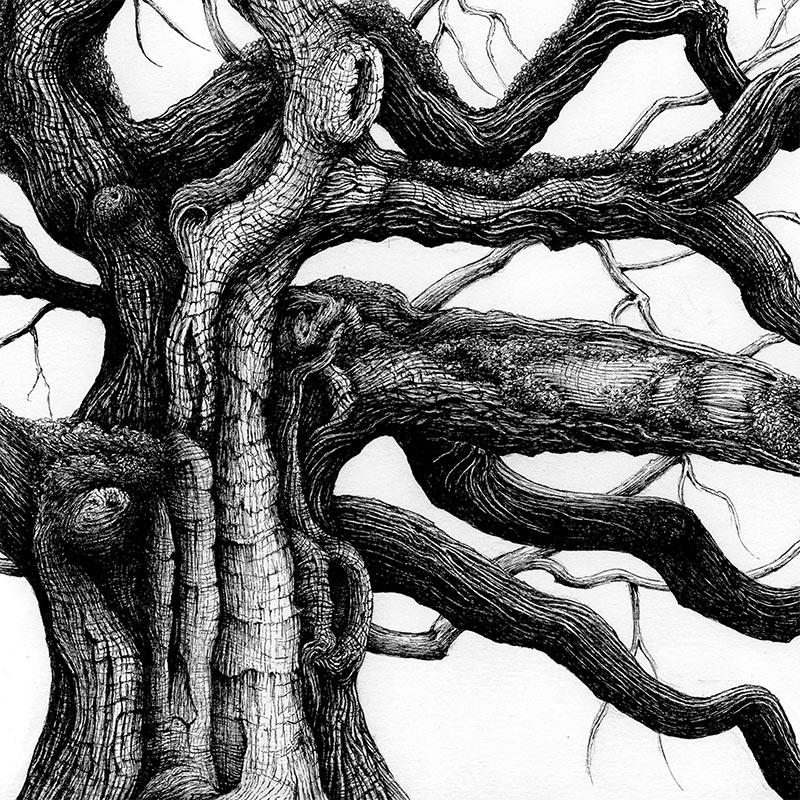 Karl Trewhela - Great Oak (Detail 2)