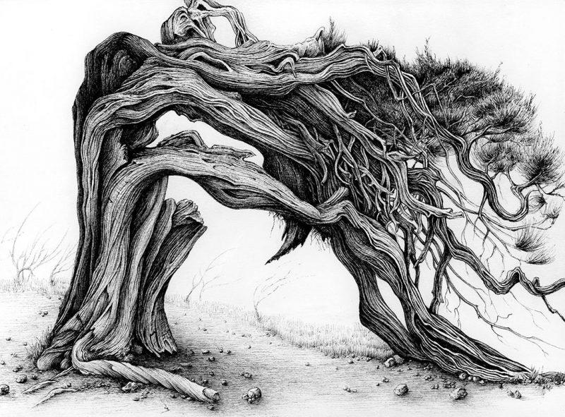 Karl Trewhela - Juniper 1 - Tree 3