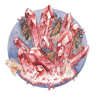 Caitlin Rose Davis - The Crimson Enigma