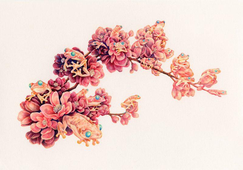 Song Kang - Frog Blossoms