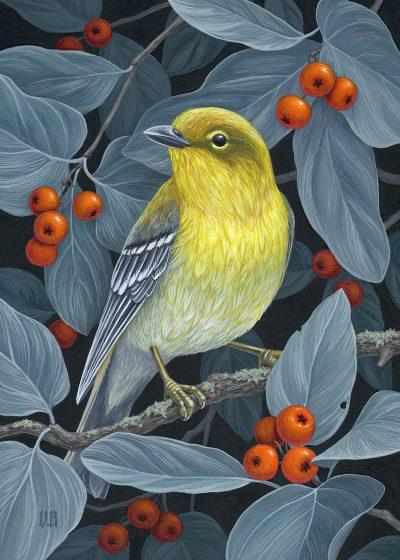 Vasilisa Romanenko - Pine Warbler