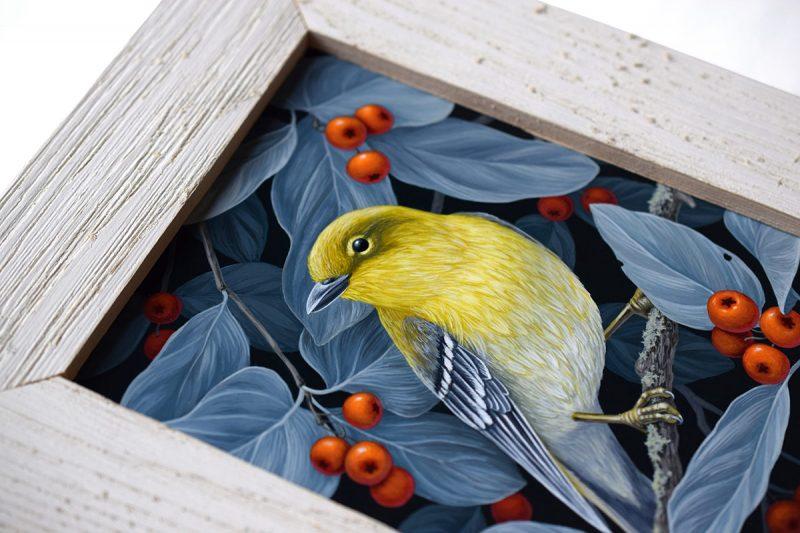 Vasilisa Romanenko - Pine Warbler (Frame Detail)