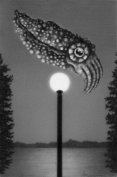 Juliet Schreckinger - Clarence the Cuttlefish and his Night Light