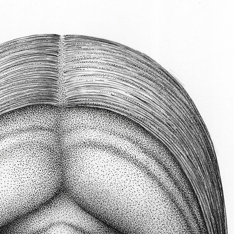Aaron Robert Baker - Head 3 (Detail 3)